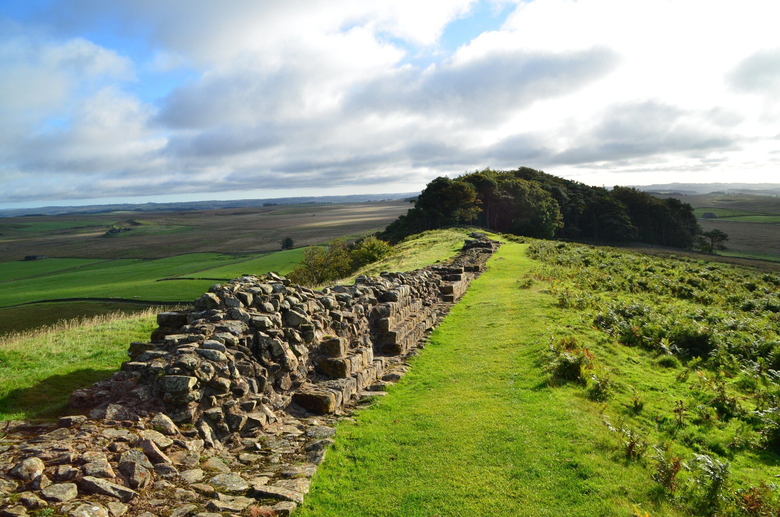 Great section of Roman Wall at Sewingshields, heading towards small patch of woodland, on the Hadrian's Wall Path