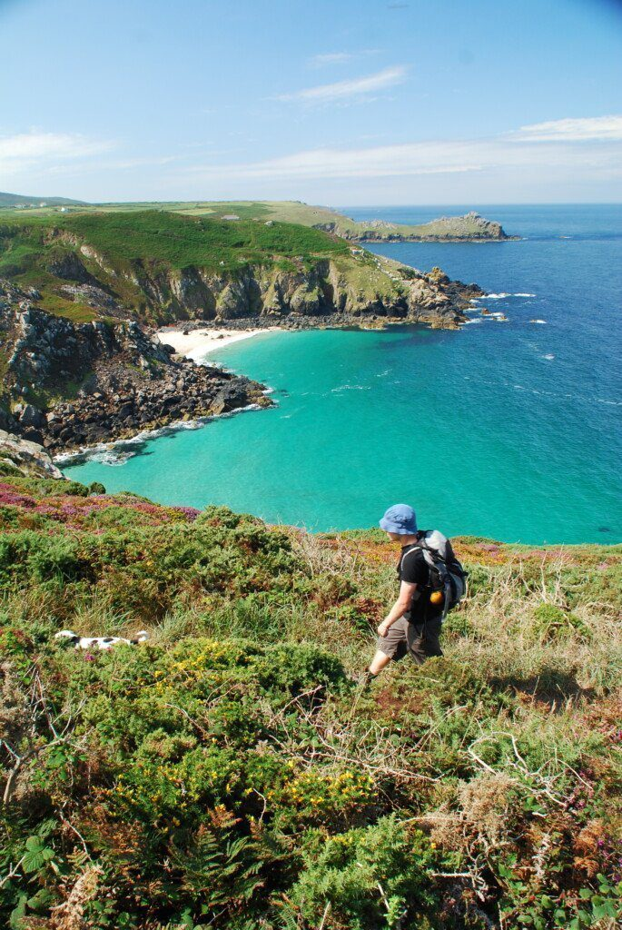 Hiker walking past azure sea on the Cornish Coast with Daisy the Dog running ahead of him, almost hidden by heather on the cliffs.