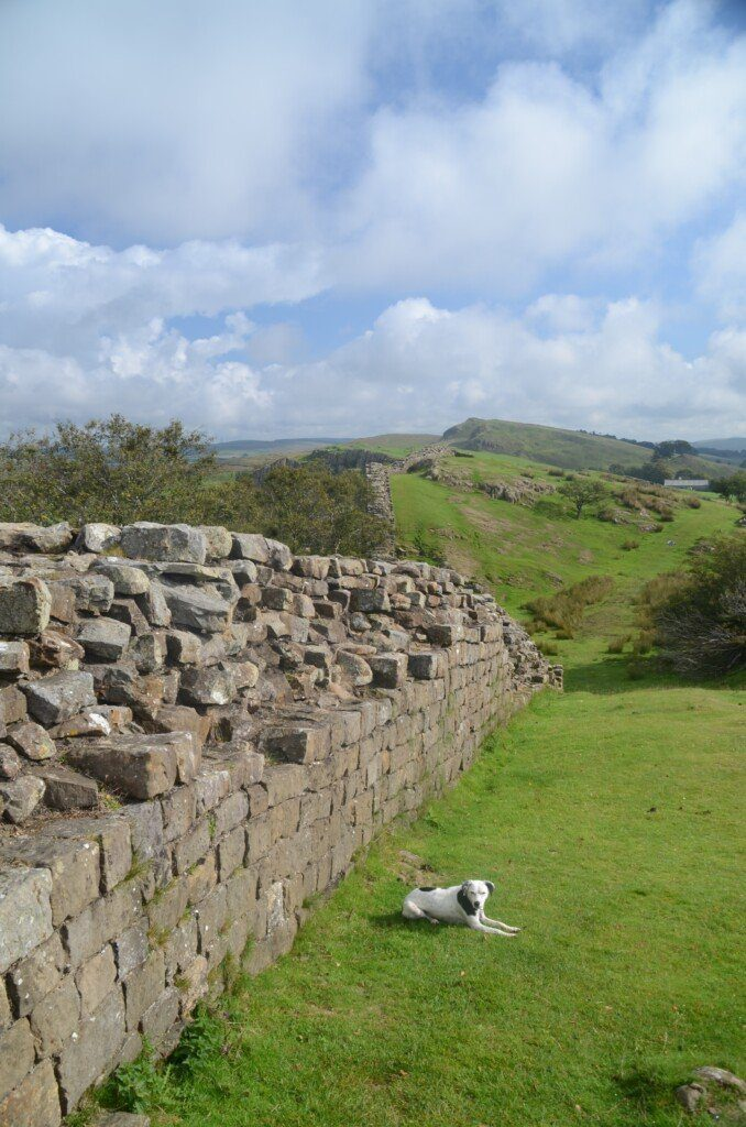 Daisy the dog lies on the grass next to a sizeable chunk of Hadrian's Wall at Walltown Quarry.