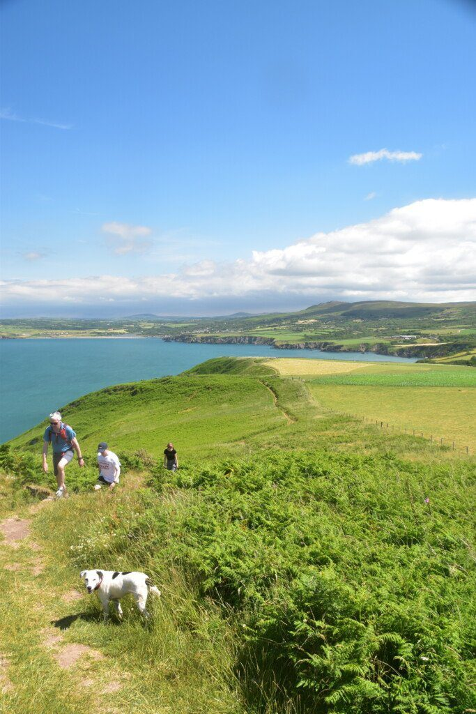 Three trekkers slowly make their way up Dinas Head while Daisy the Dog turns round to face the camera in the foreground