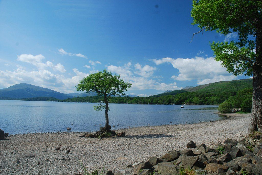 A lonely tree standing on a beach by placid Loch Lomond on a sunny day