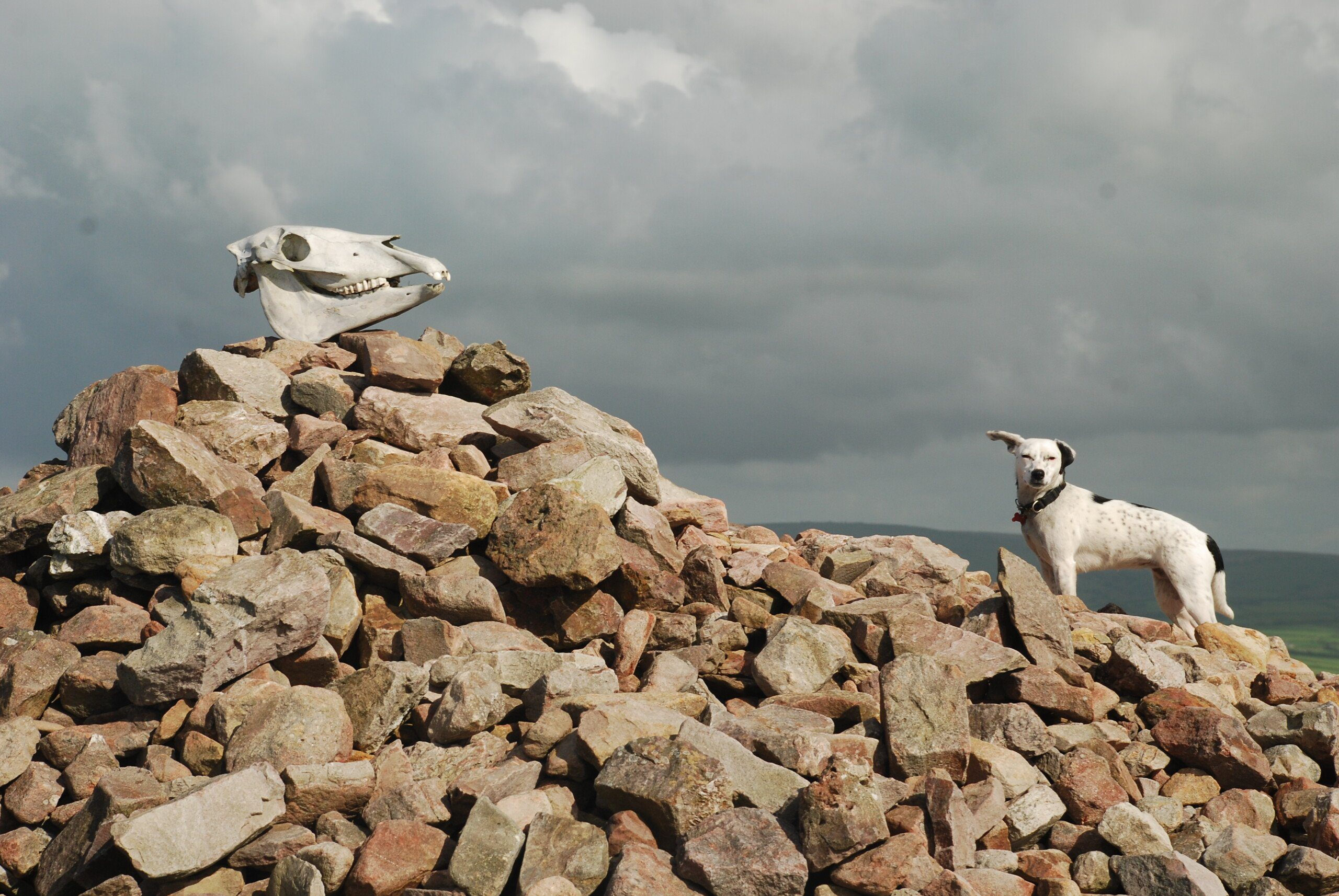 SOUTH-WEST COAST PATH PART 1 - Daisy at the top of Great Hangman