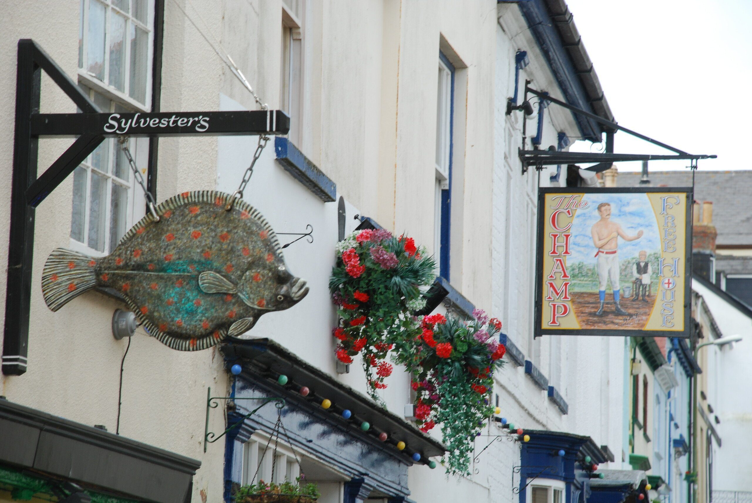 Hanging signs and shopfronts, including a fish and a pub called The Champ, Appledore, a lovely stop on the first Park of the South-West Coast Path