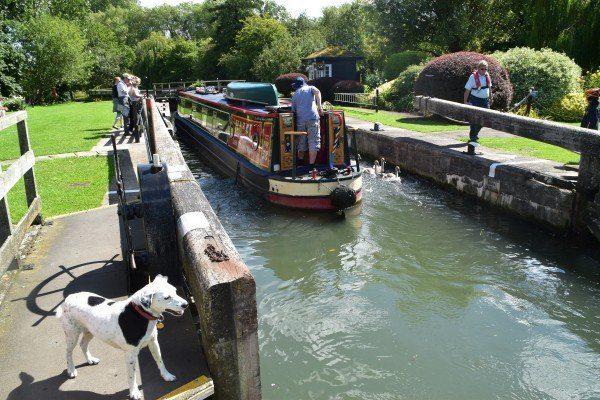 Daisy supervising as a narrow boat negotiates one of the many locks on the Thames