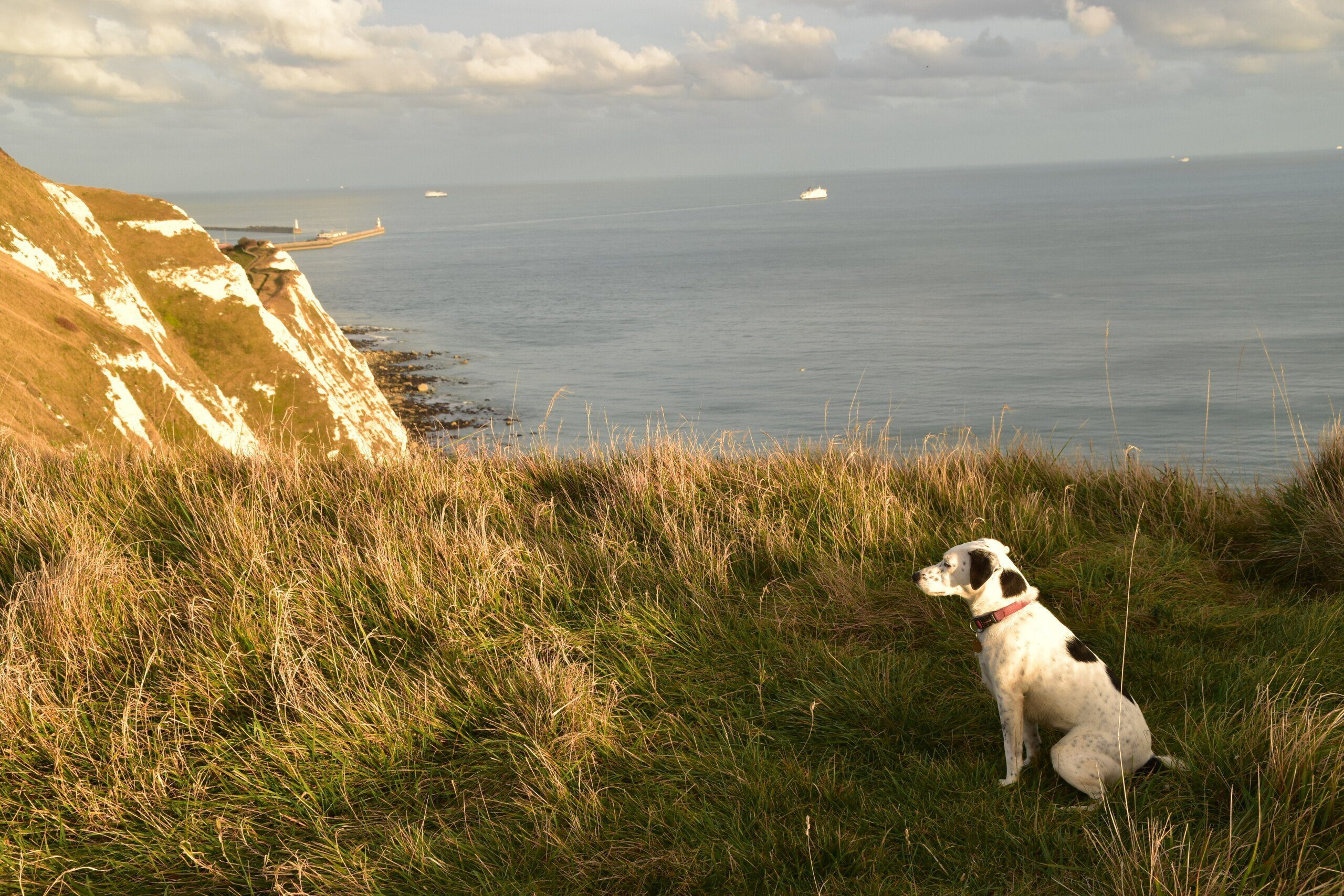 Daisy on the White Cliffs of Dover