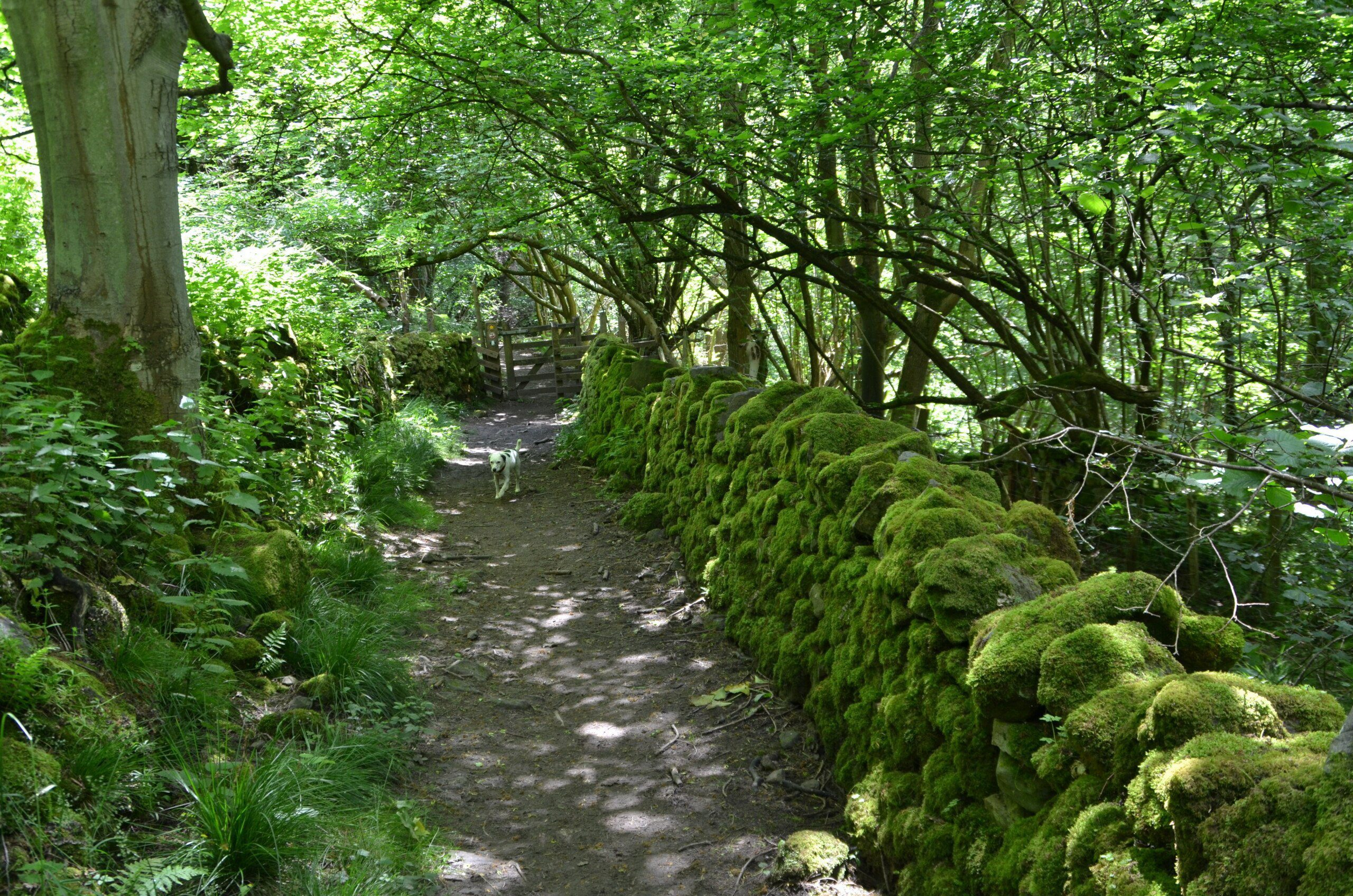 A mossy old wall in the shadow of trees