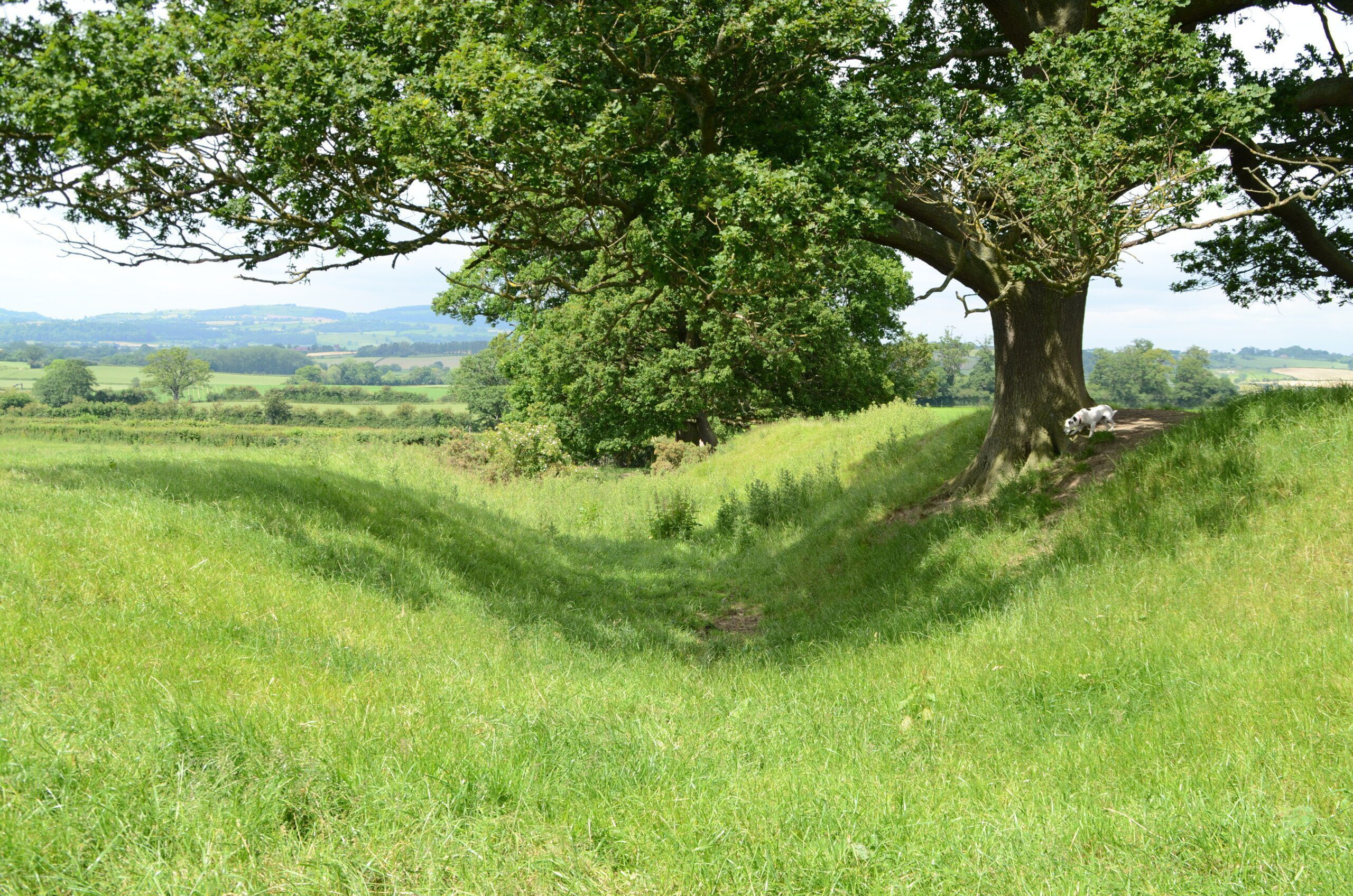 A distinctive dip in the ground in the shade of a tree. This is Offa's Dyke, visible here between Castle Mill to Brompton Crossroads
