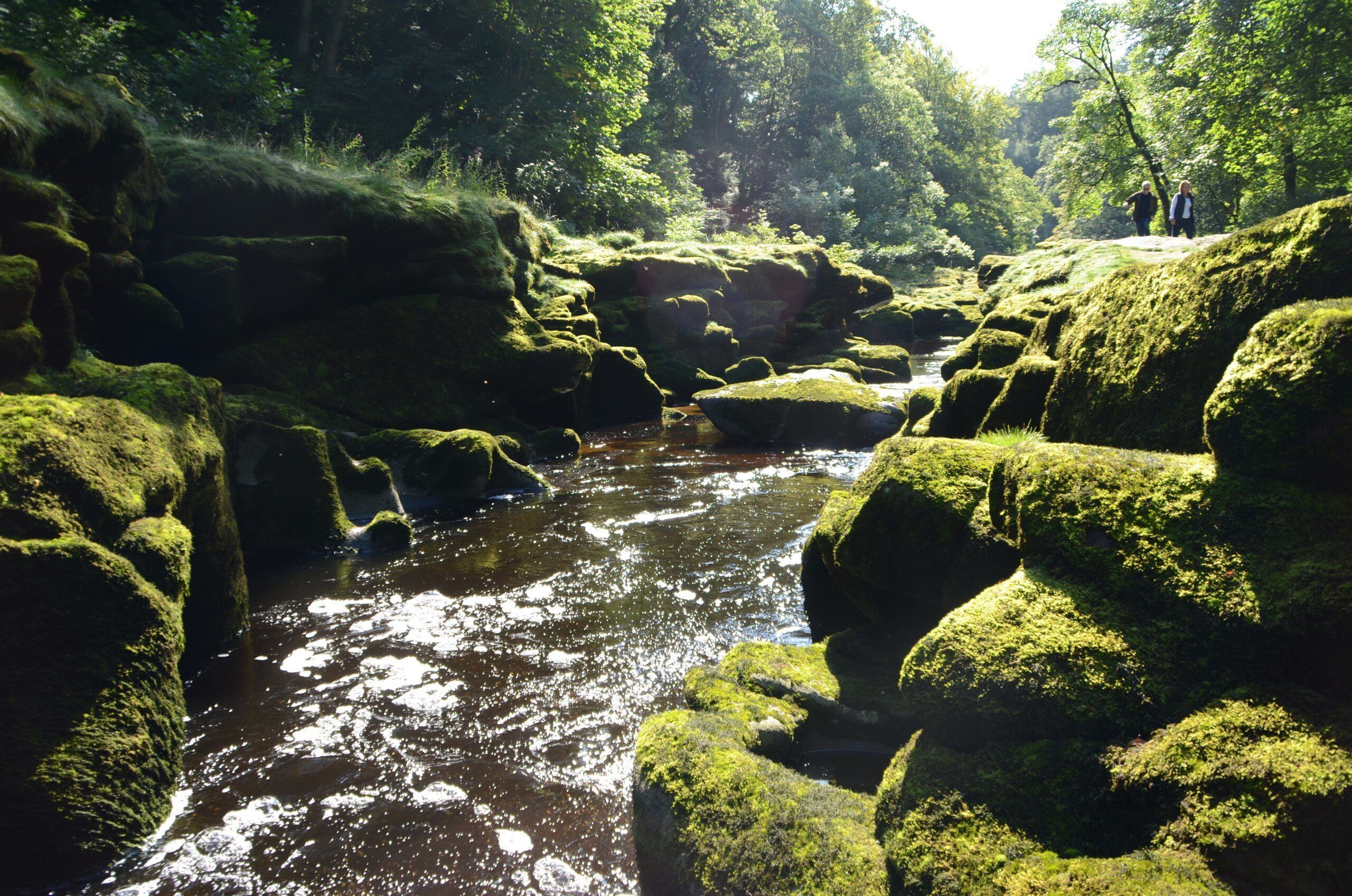 DALES WAY Shot of mossy rocks by a section of river known as the Strid