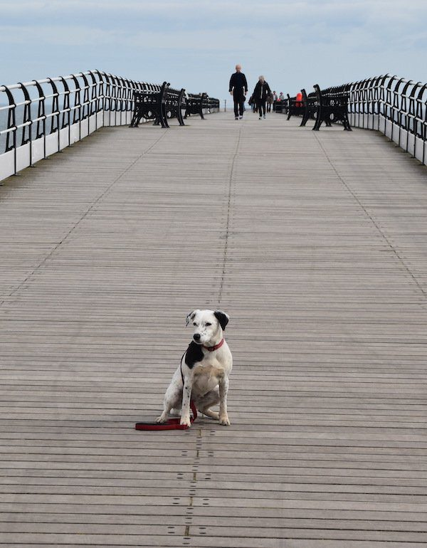 Daisy pauses on Saltburn Pier on the Cleveland Way
