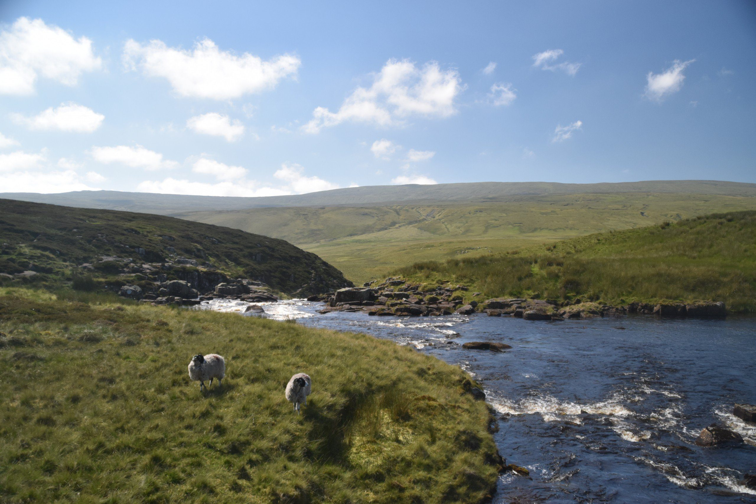 Two sheep enjoy the solitude by a lonely river on the way to Dufton.