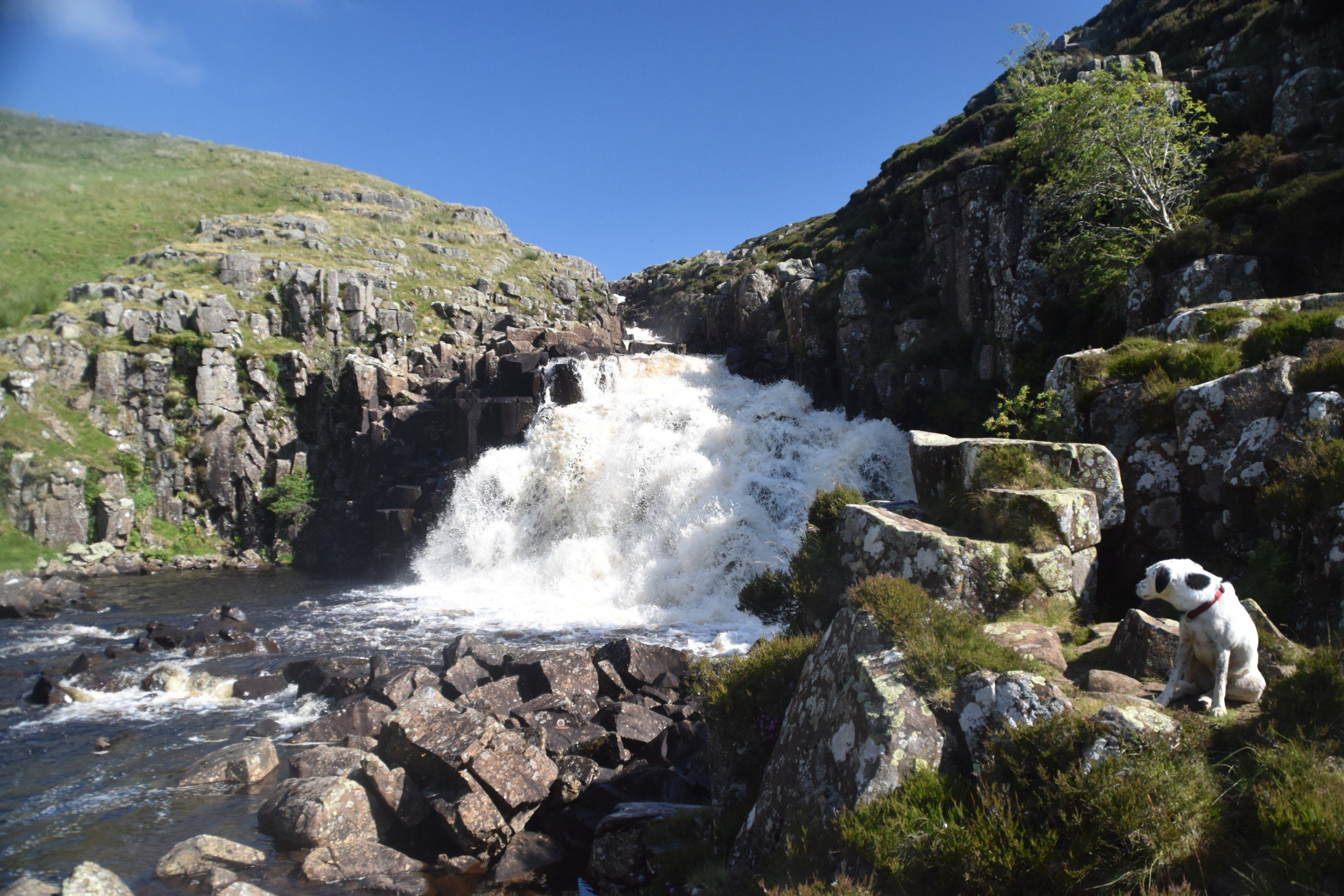 PENNINE WAY: Daisy with back to Cauldron Snout waterfall, on the way to Dufton