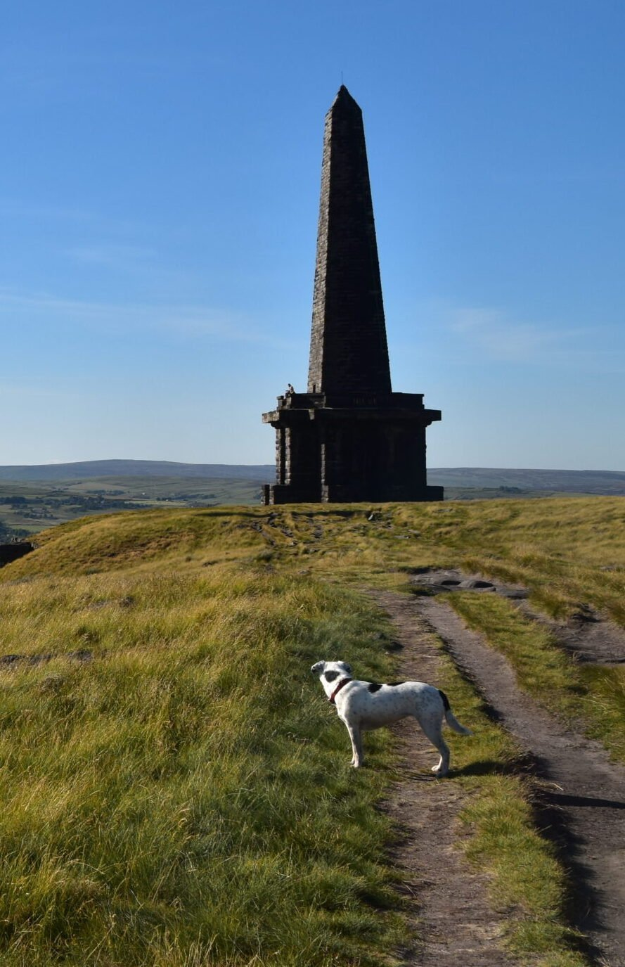 Daisy stares at monument on Pennine Way above Hebden Bridge