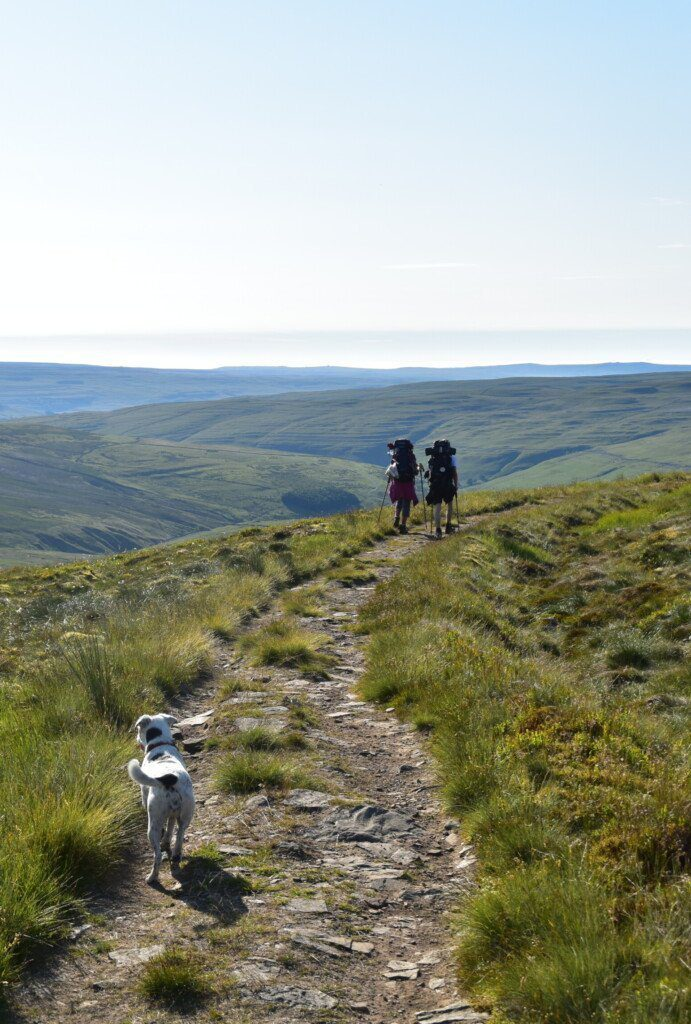 Two hikers with heavy bags marching with their back to the camera along a rough track atop a fell, with Daisy in the foreground