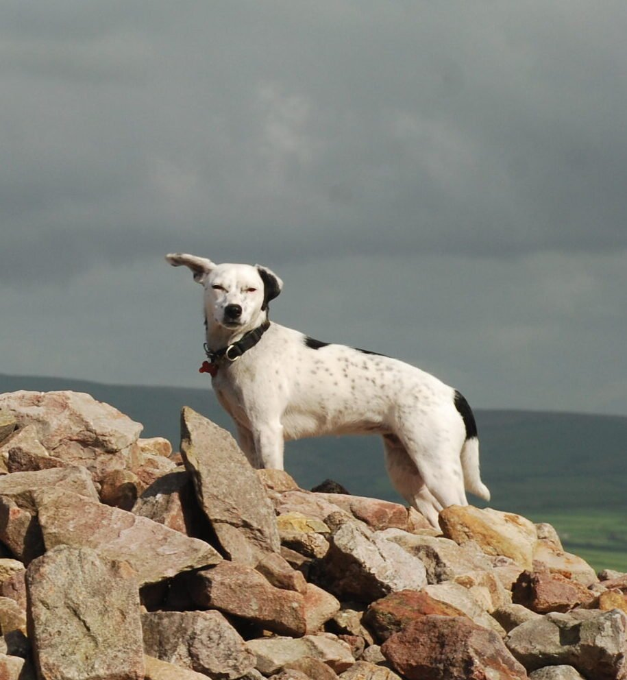 Daisy listens to a cow skull at Great Hangman on the South-West Coast Path