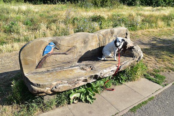 On the London LOOP a dog sits on wooden bench carved with kingfisher