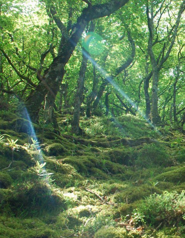 Sunlight streaks through trees on South-West Coast Path