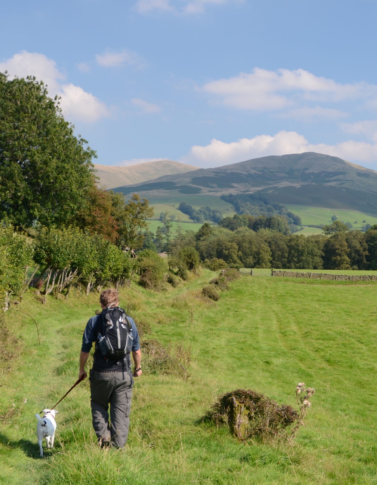 Walker on Dales Way with Daisy Dog heads towards the Lake District